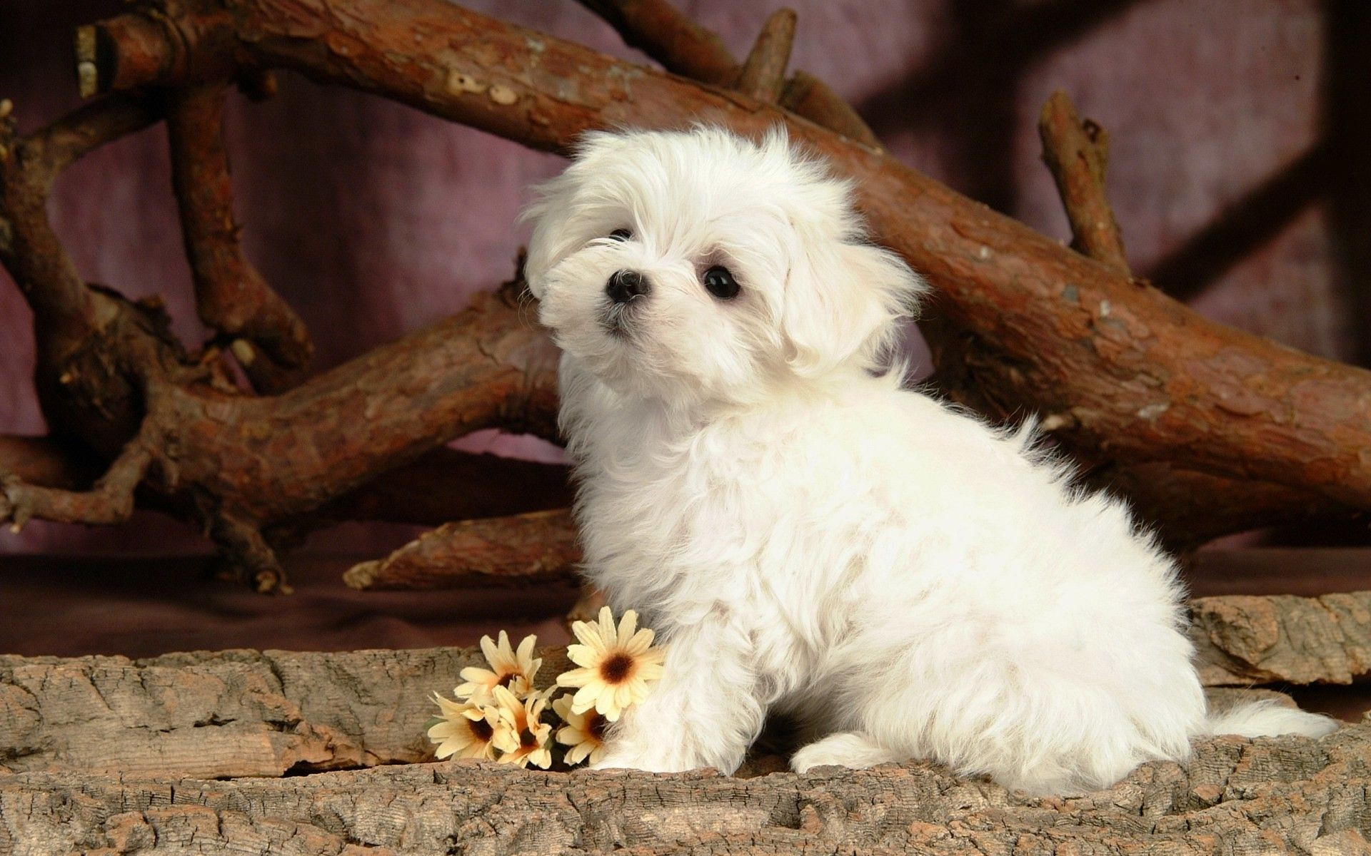 54 dog backgrounds 183�� download free amazing wallpapers of