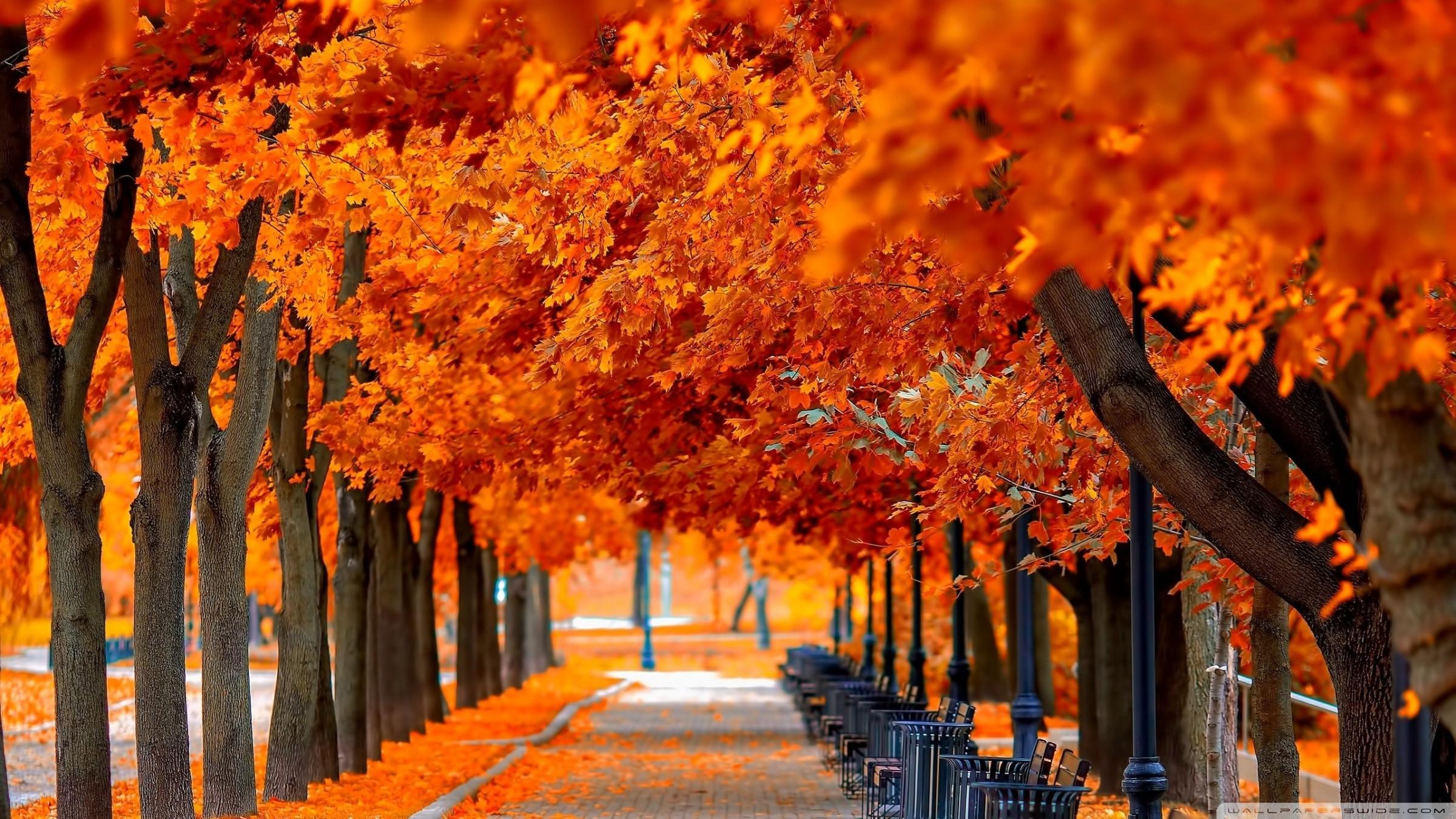 fall tree wallpaper ·①