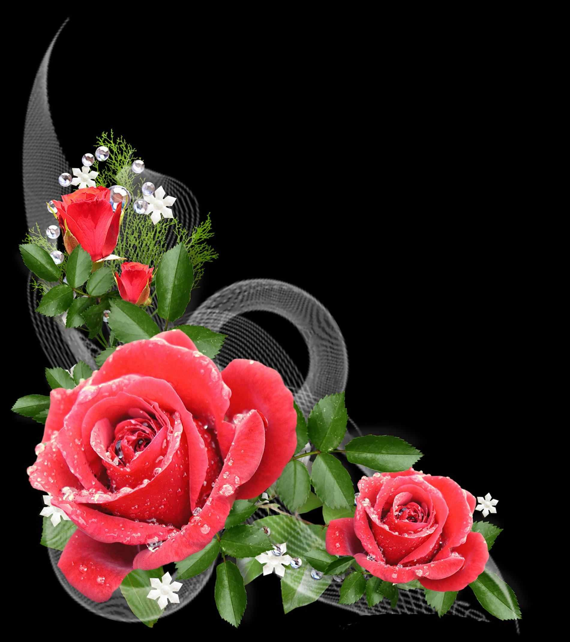 Red Rose Flower Background ·① WallpaperTag