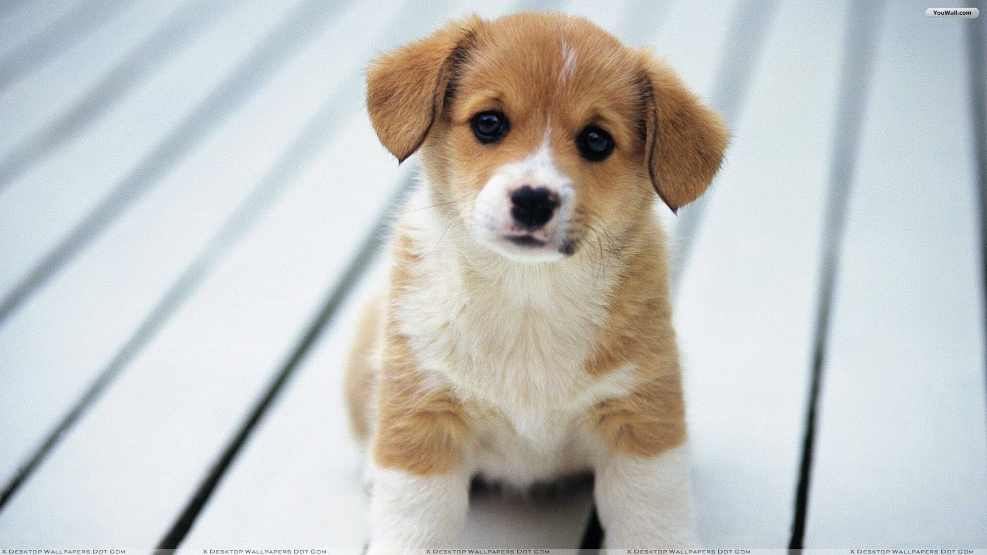 Other Wallpaper Cute Desktop Background For Source Puppy Backgrounds