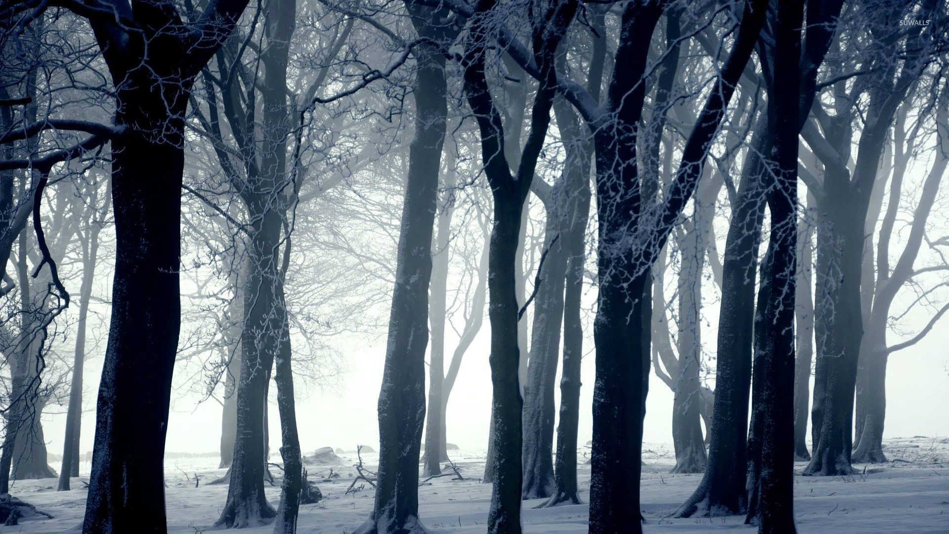 Snowy Dark Forest Wallpaper Wallpapertag