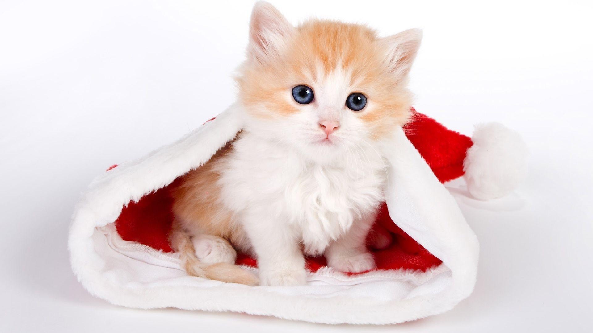 1920x1080 wallpapers for cute kitten wallpaper desktop