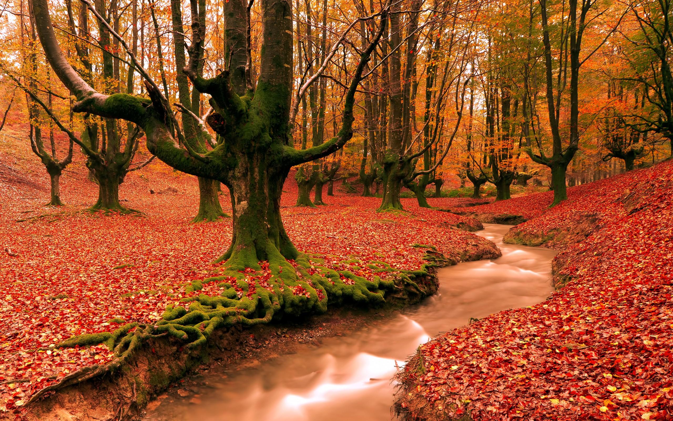 Autumn Desktop Wallpaper 1 Download Free Stunning Full HD