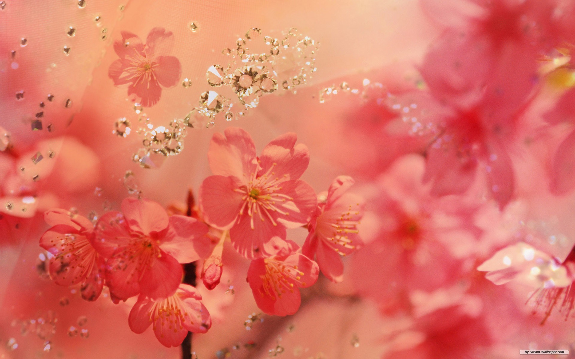 Free Flower Wallpaper Backgrounds Flowers Healthy