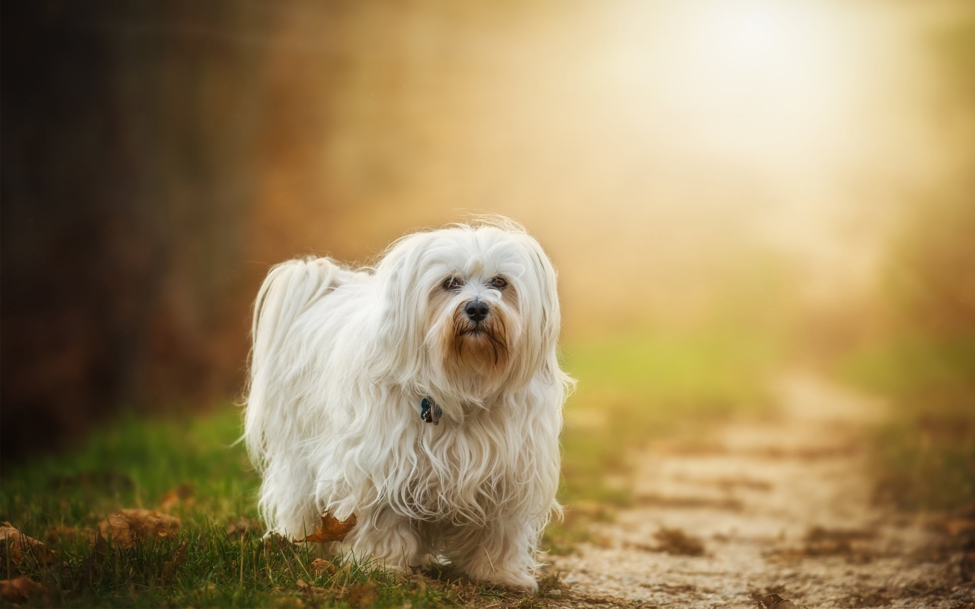 54 dog backgrounds download free amazing wallpapers of dogs 1920x1200 awesome pretty havanese dog background voltagebd Choice Image