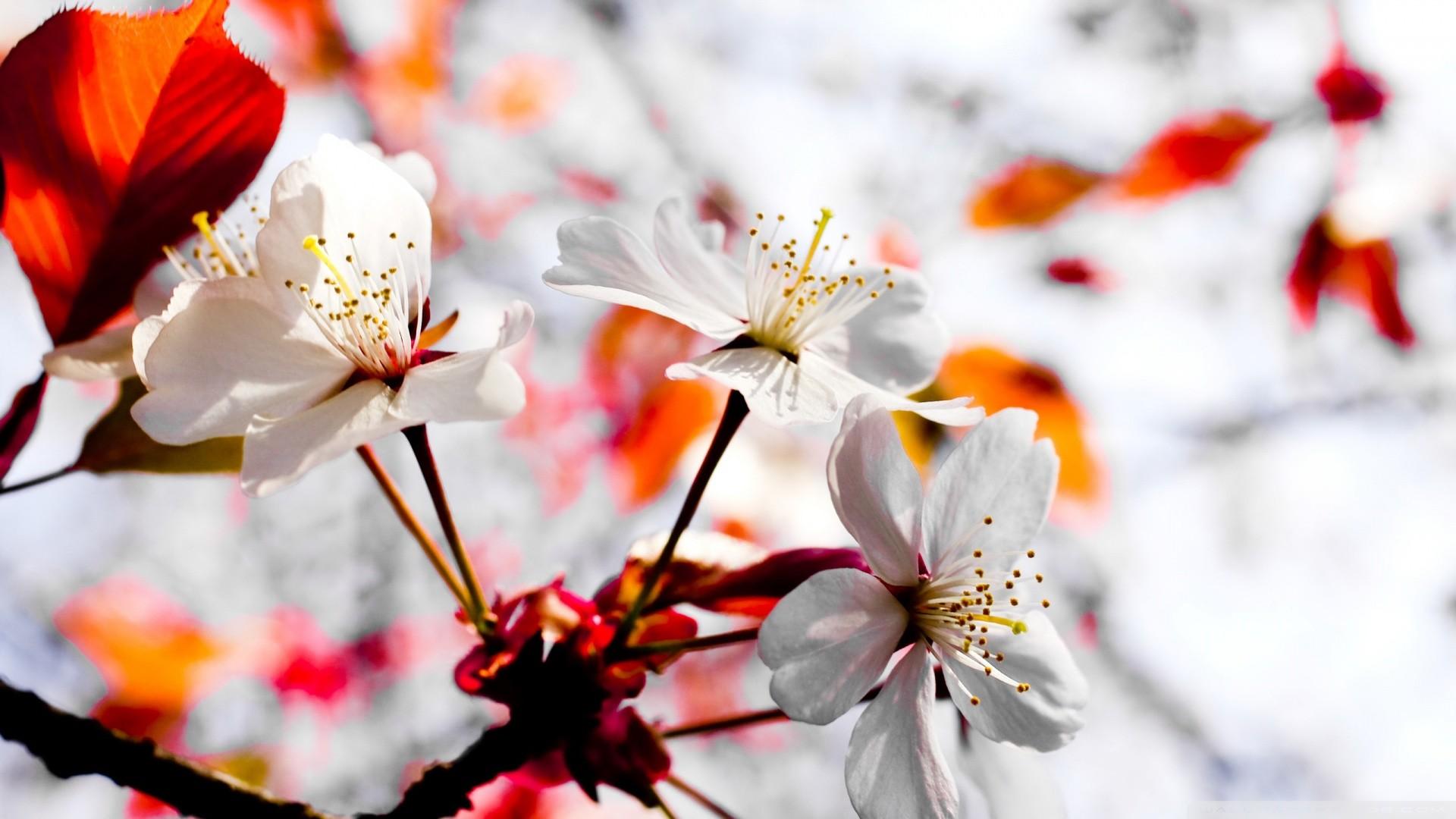 Spring Season Wallpapers ·① WallpaperTag