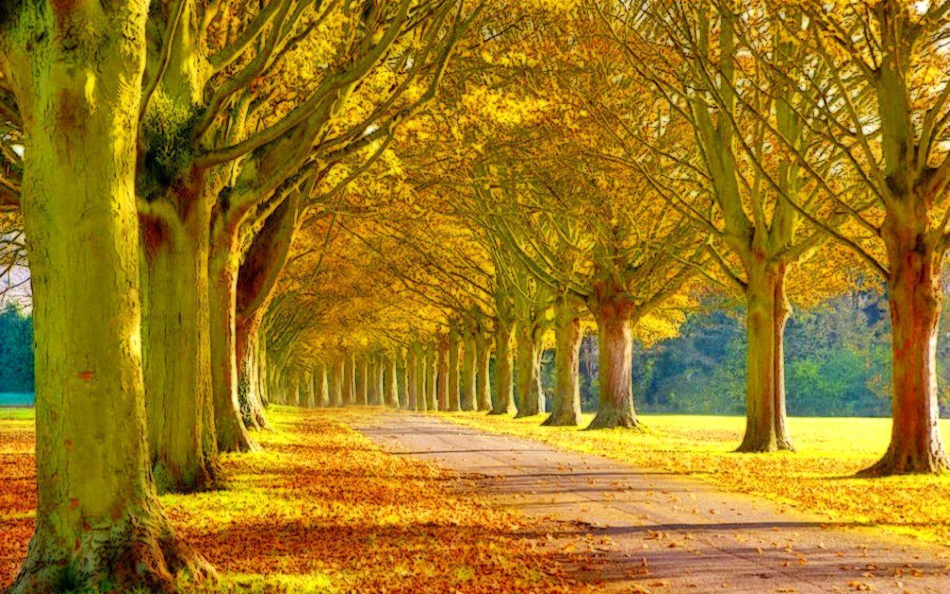 beautiful scenery wallpapers ·①
