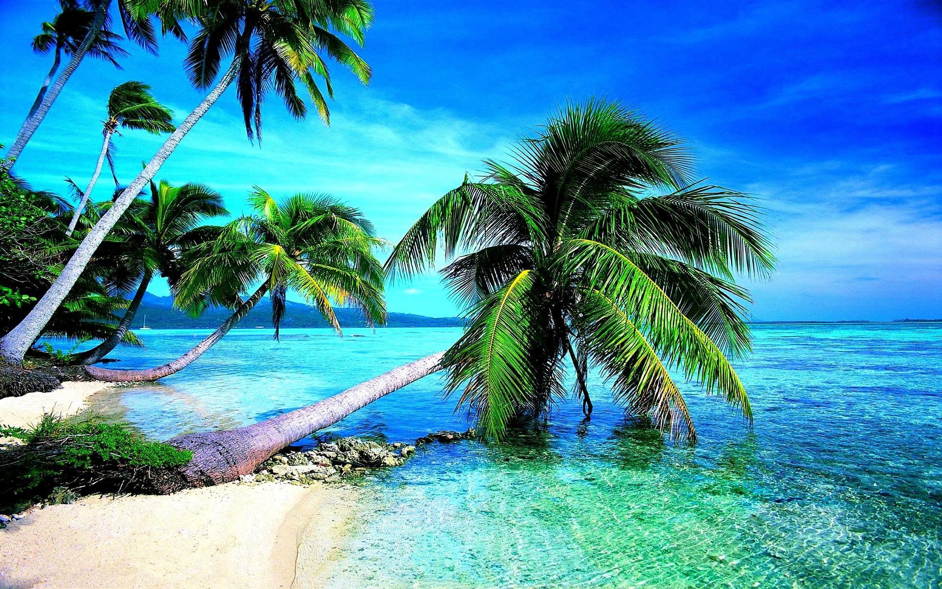 1920x1200 Image - Download-tropical-beach-wallpaper-hd-desktop.jpg .
