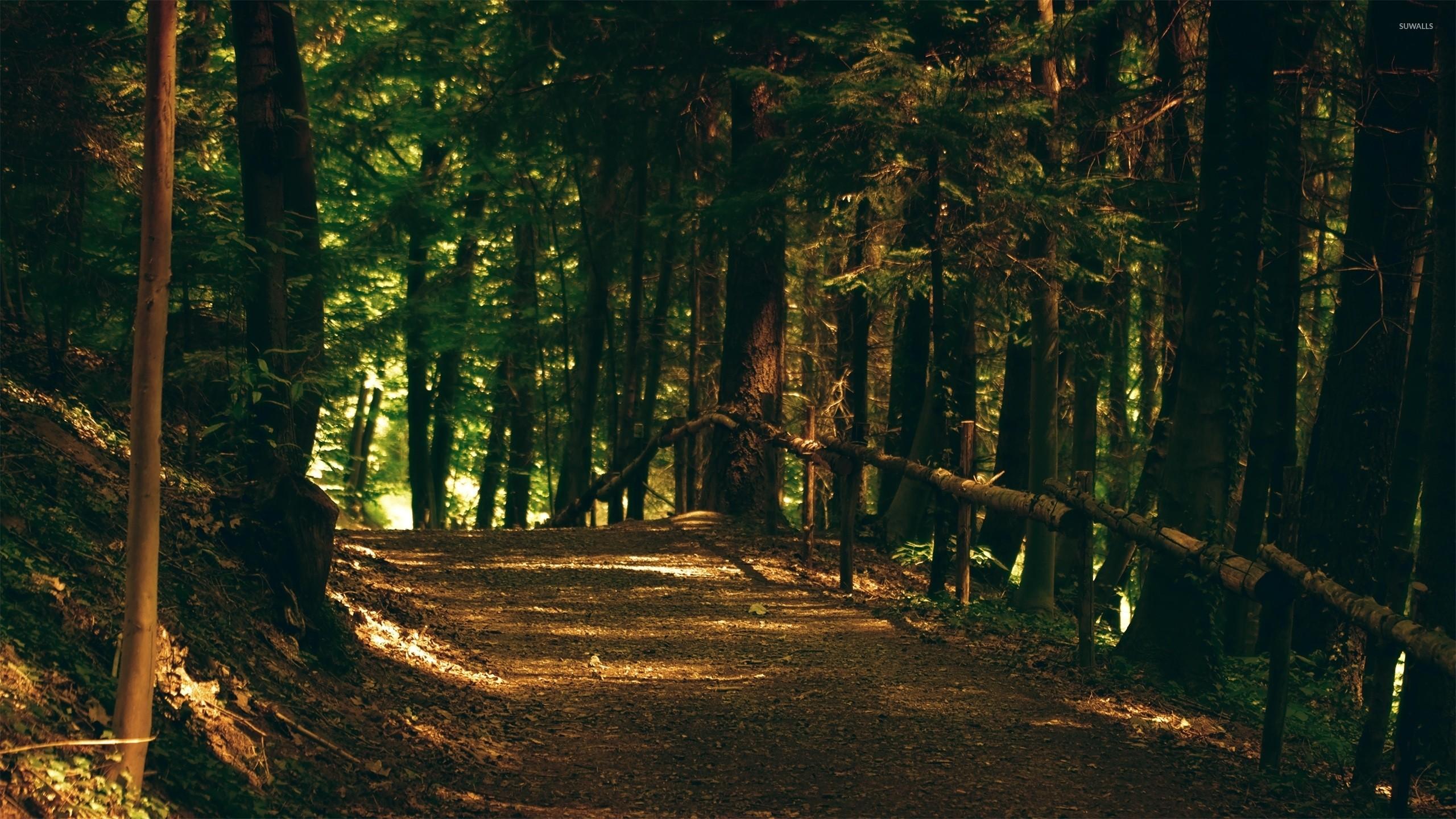 Woods Hd