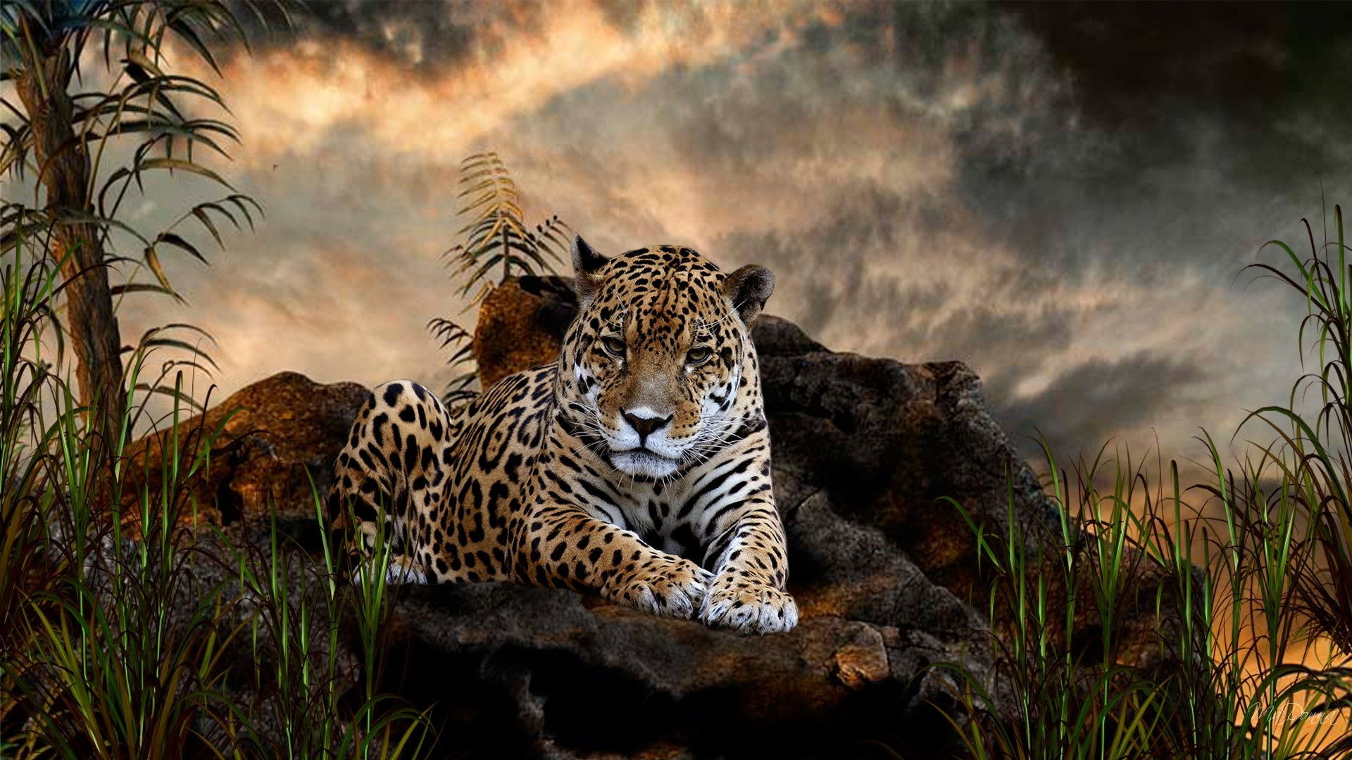 Cute Baby Animal Wallpapers Download Free I