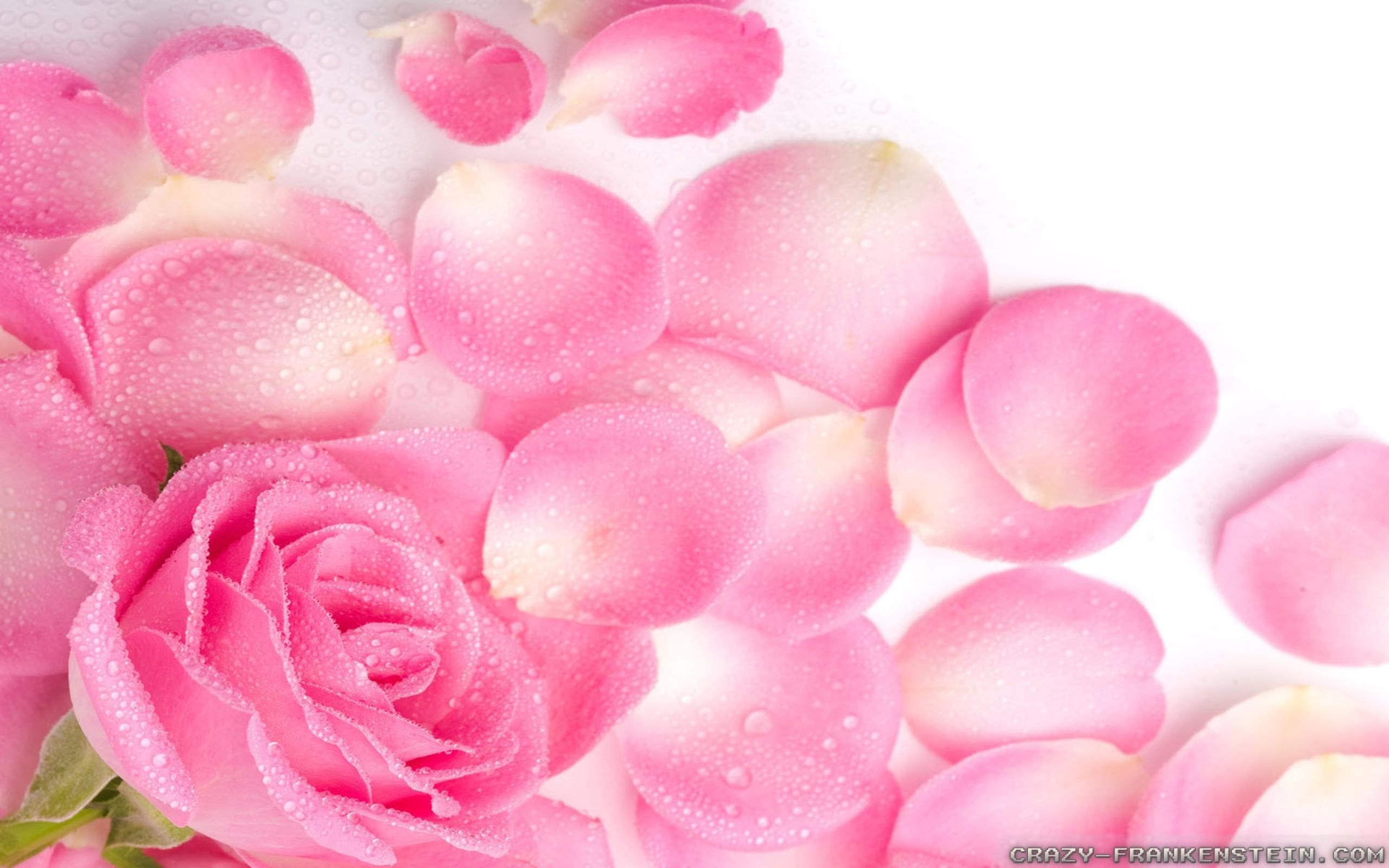 Pink rose background wallpapertag - Red rose petals wallpaper ...