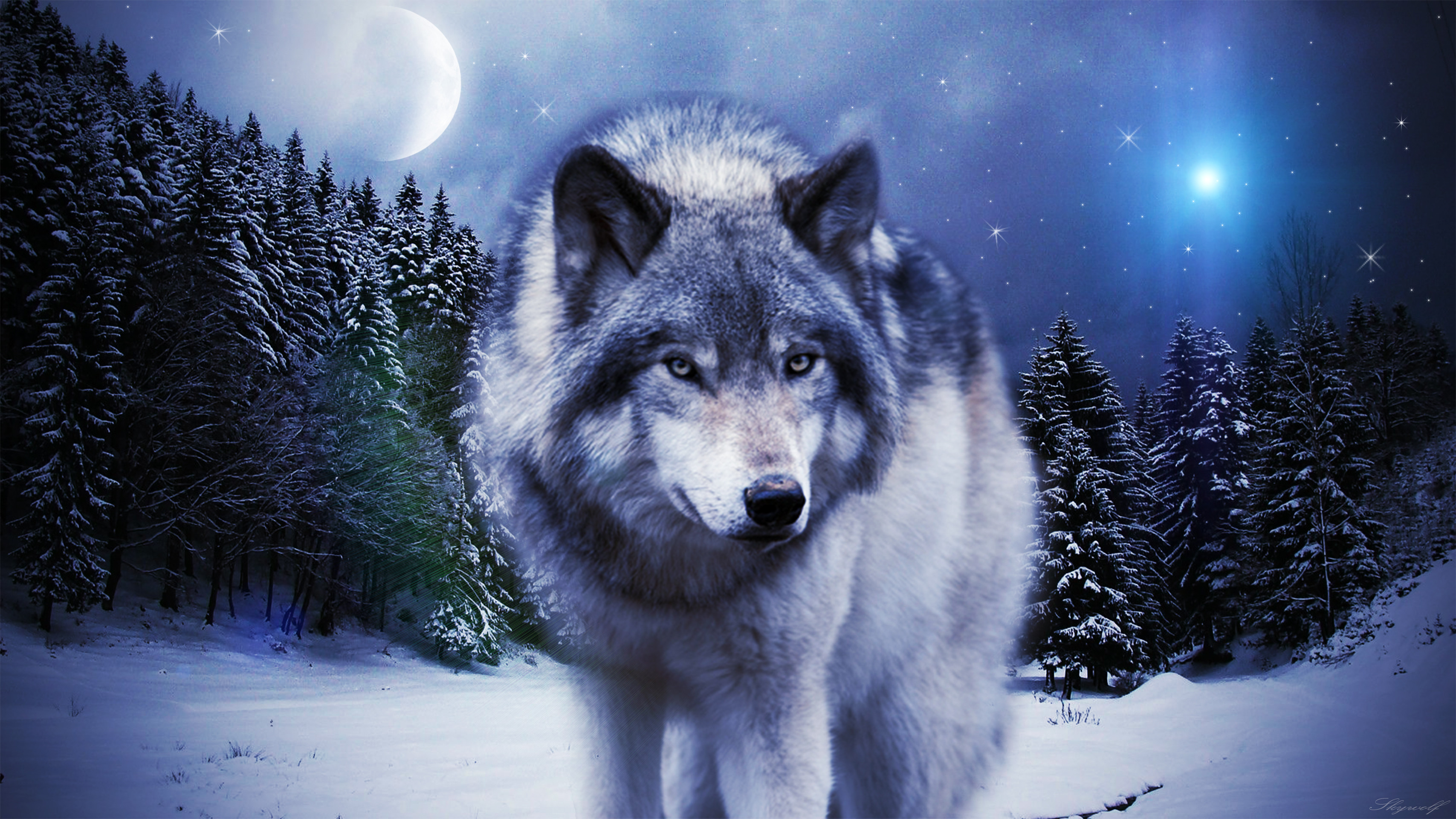 Hd Wolf Backgrounds: Timber Wolf Wallpaper ·① WallpaperTag