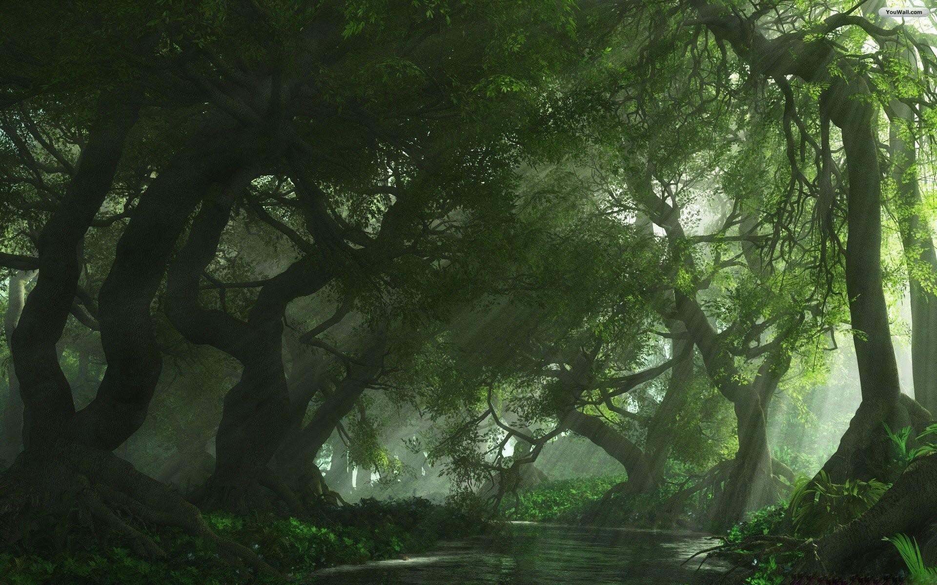 Beautiful Wallpaper Macbook Forest - 537089-green-forest-background-1920x1200-for-macbook  Trends_346861.jpg