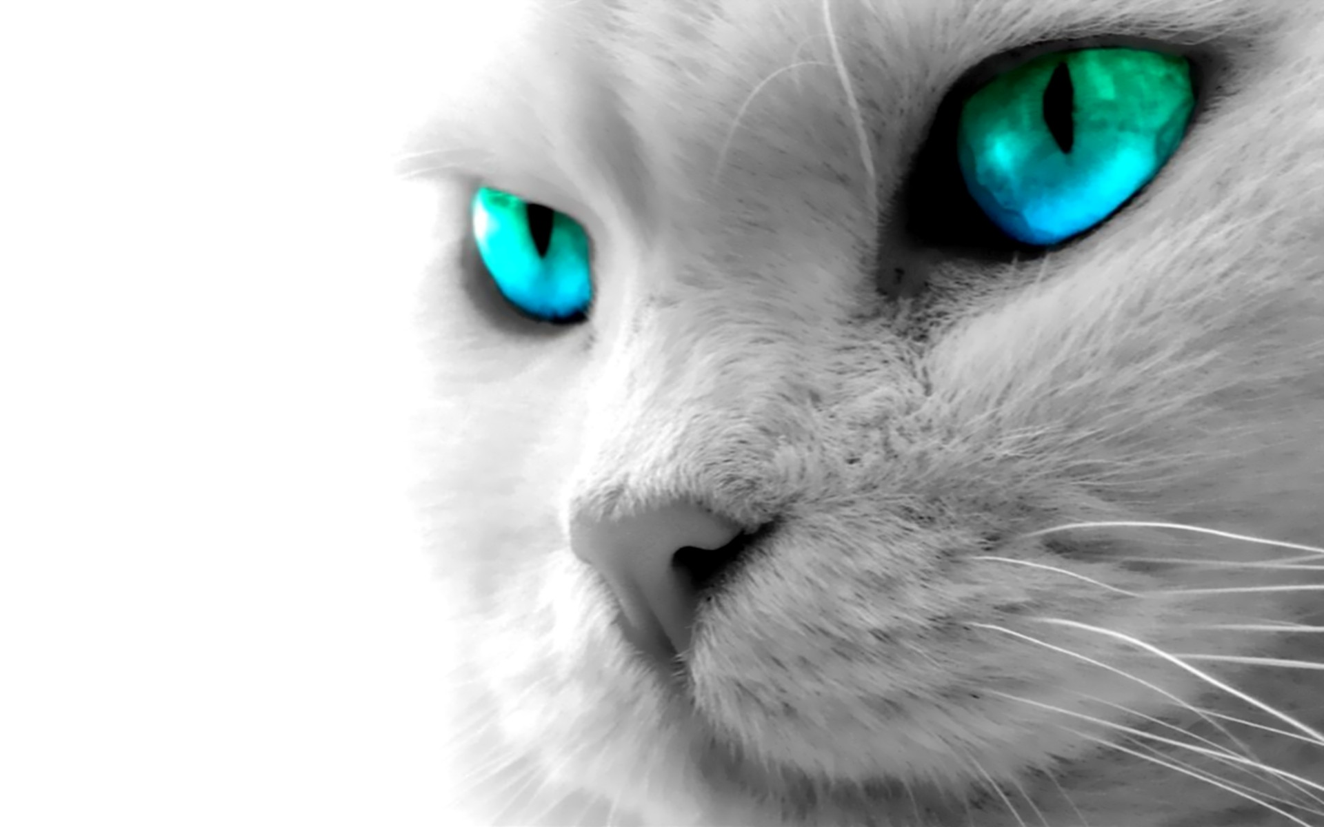 49 Animal Wallpapers 1 Download Free Amazing HD Backgrounds For