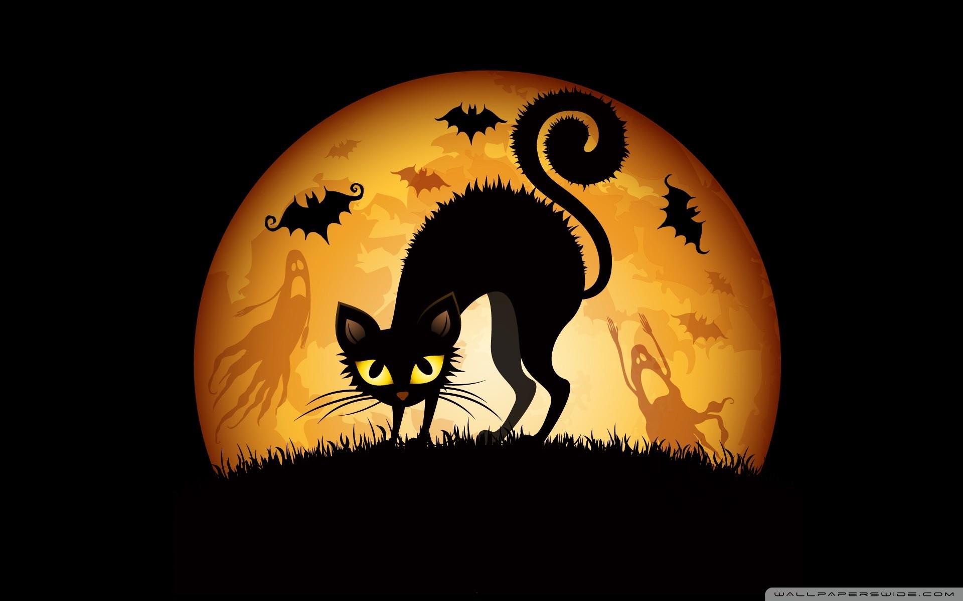 Must see Wallpaper Halloween Kitten - 492962-halloween-cat-wallpaper-1920x1200-photo  Pic_757118.jpg