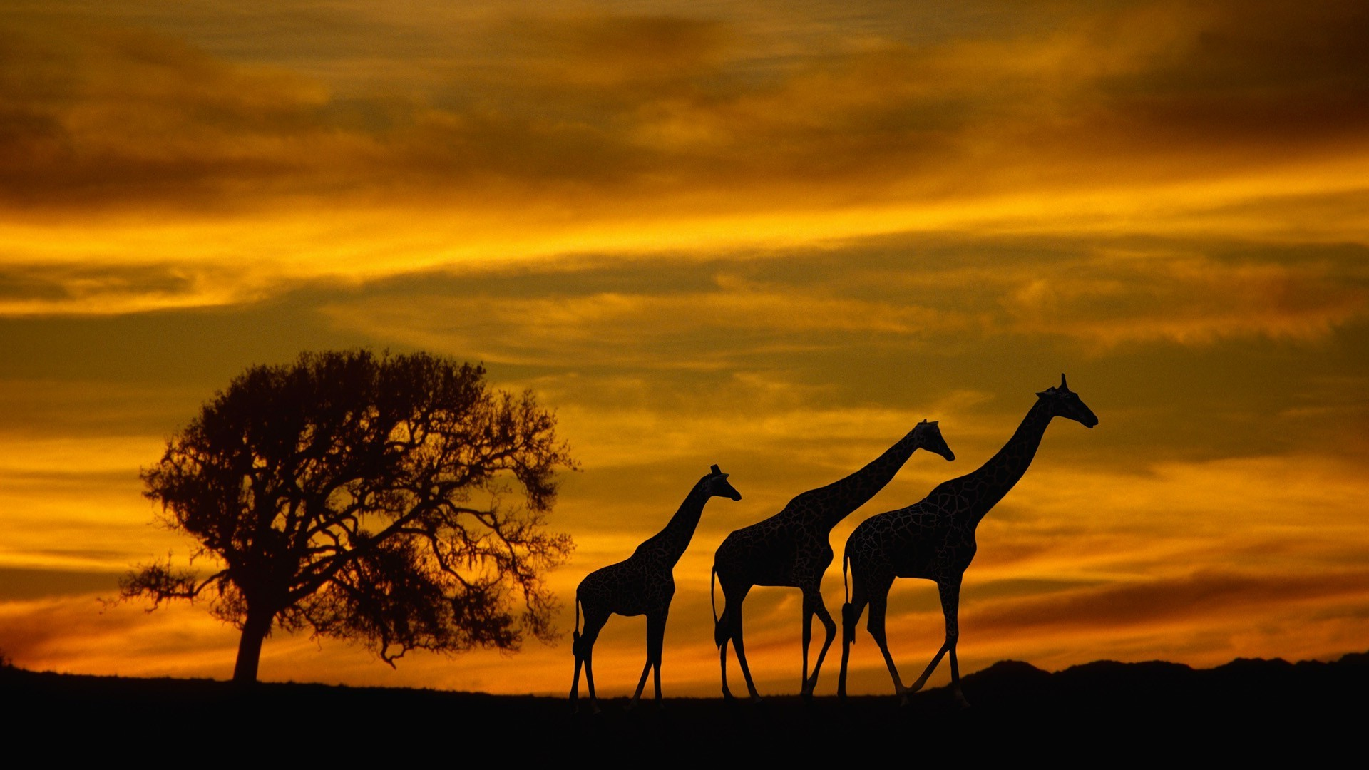 Wildlife desktop backgrounds wallpapertag - Best animal wallpaper download ...
