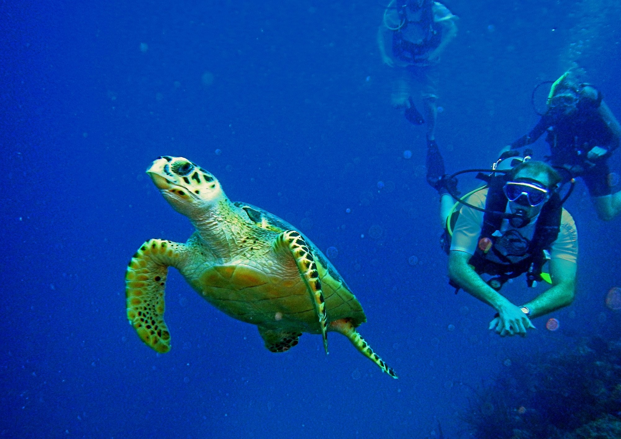 scuba diving wallpaper wallpapers - photo #45