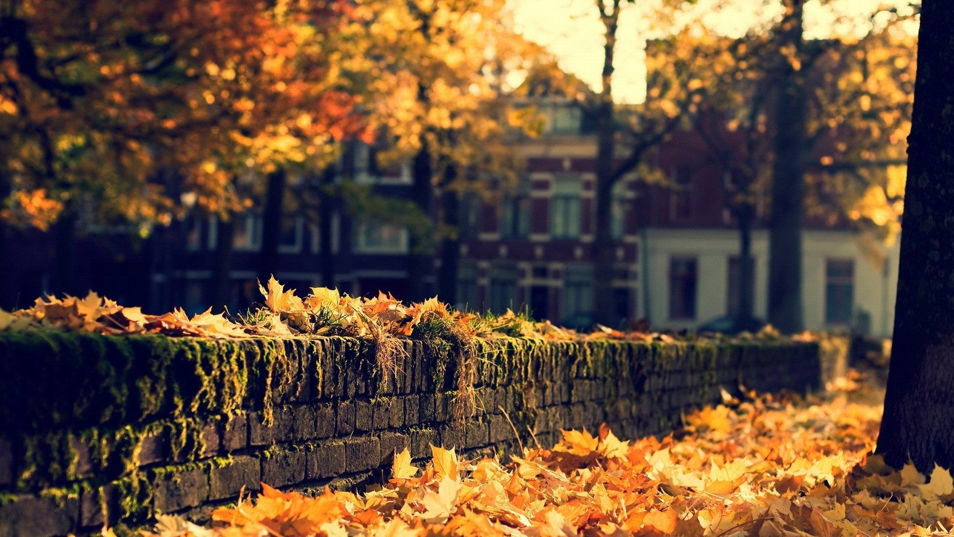 autumn desktop wallpapers backgrounds ·①