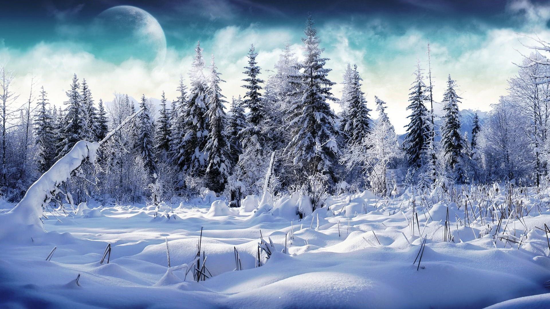 Обои зима сказочный лес 5