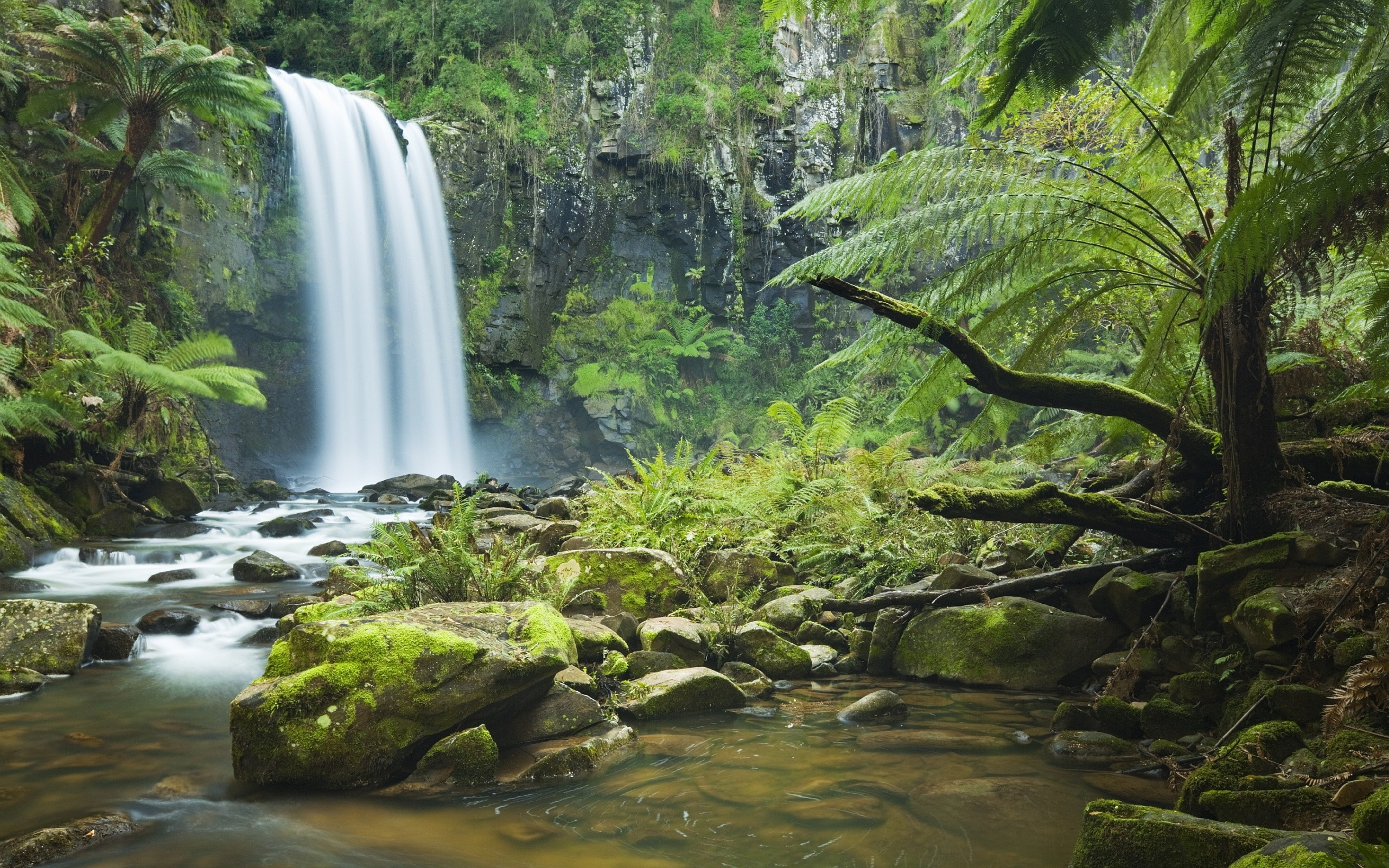 Amazon rainforest wallpaper wallpapertag - Amazon wallpaper hd ...