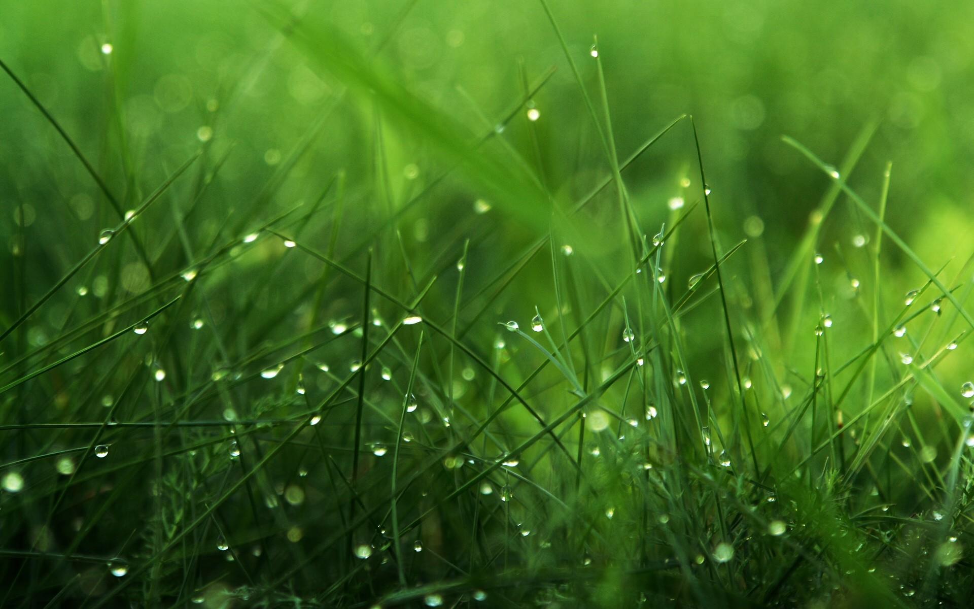роса на траве  № 2510368 загрузить