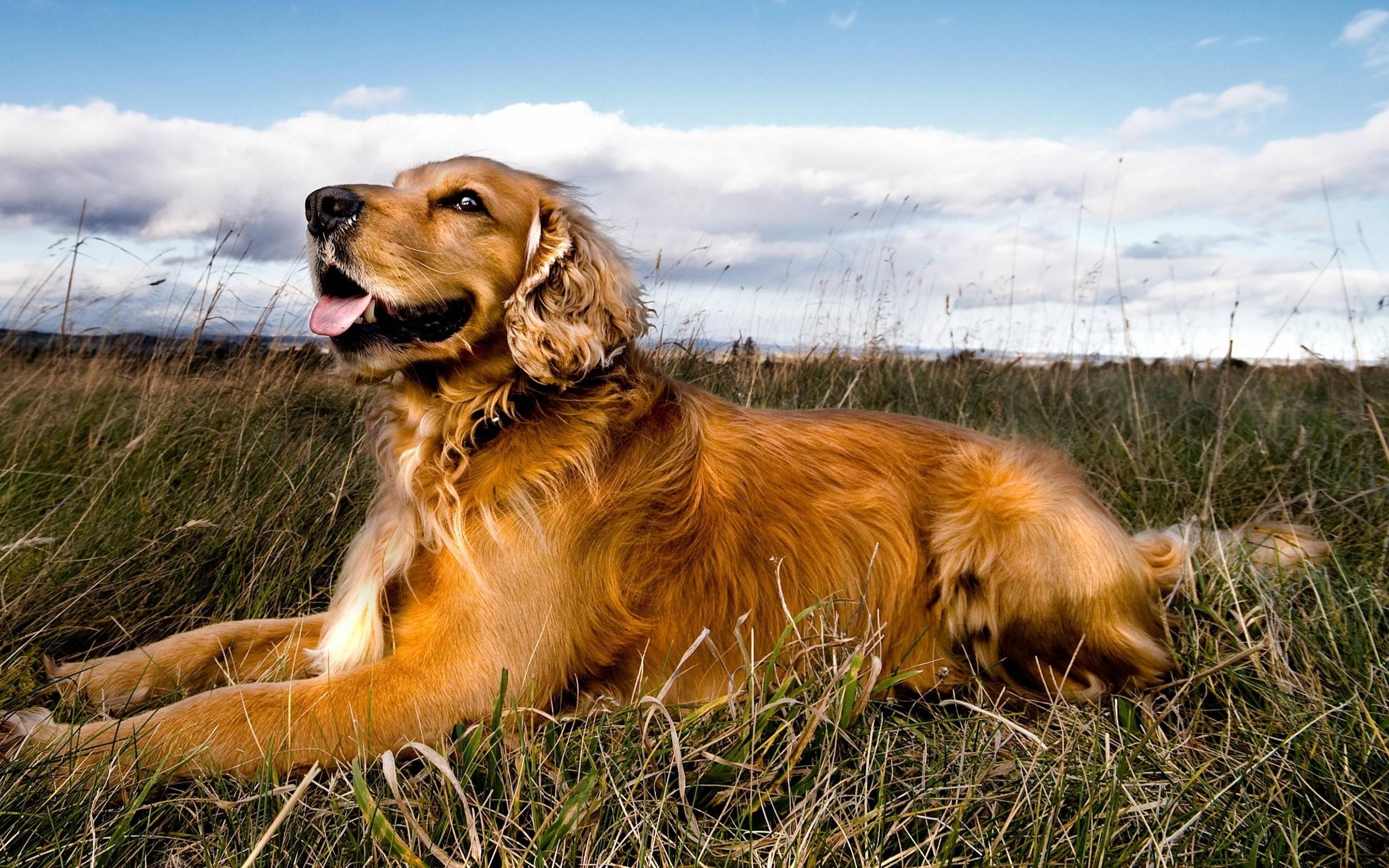 пёс язык собака на бревне  № 2524020 бесплатно