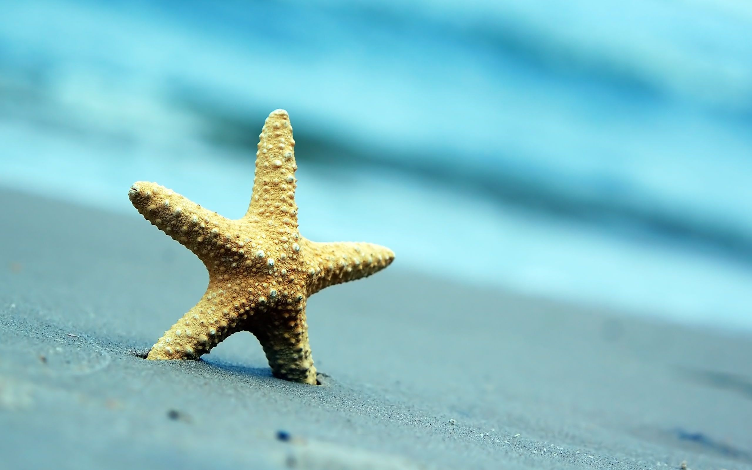 Fantastic Starfish Wallpaper 2560x1600