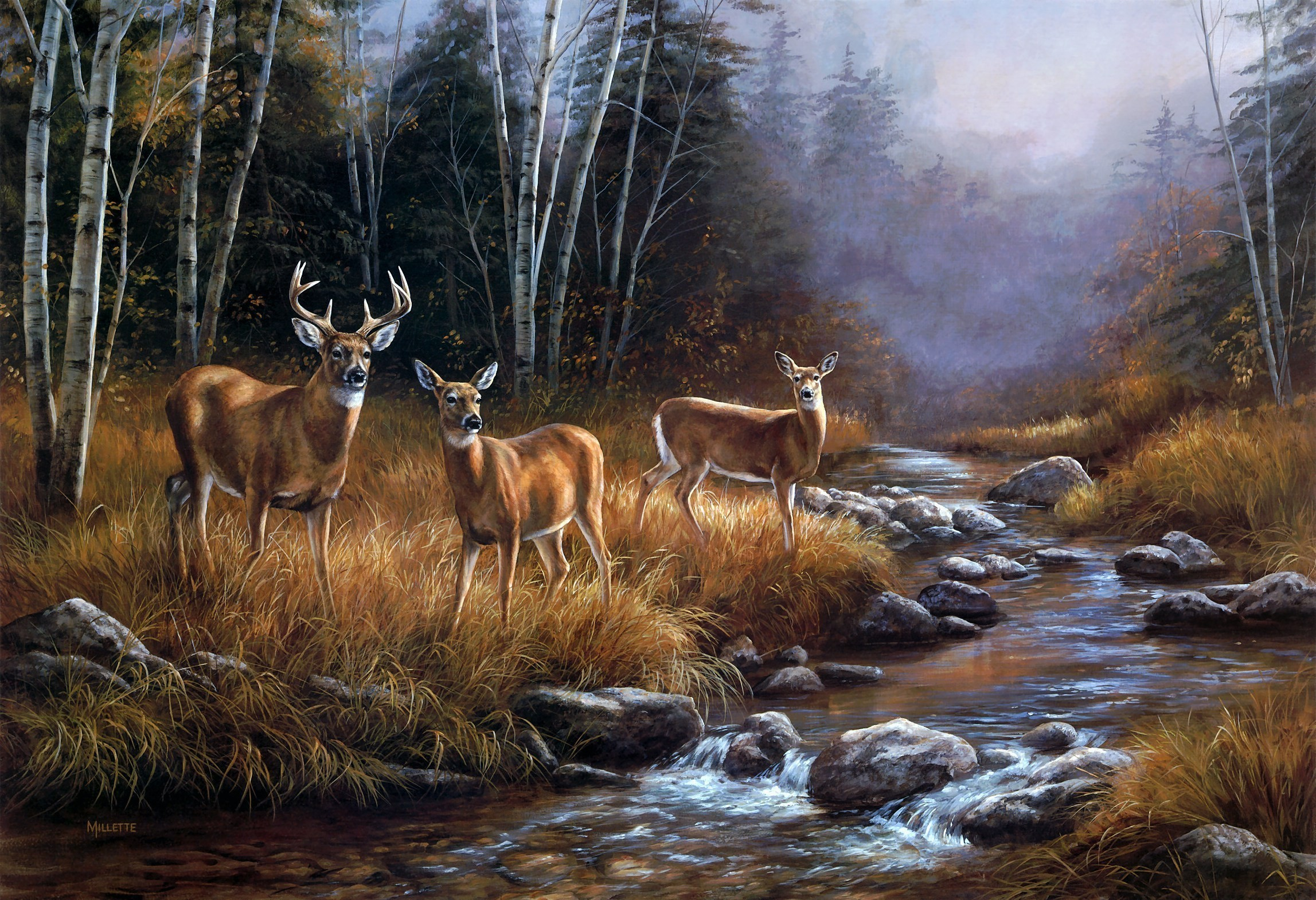 Whitetail Deer Backgrounds ·① WallpaperTag