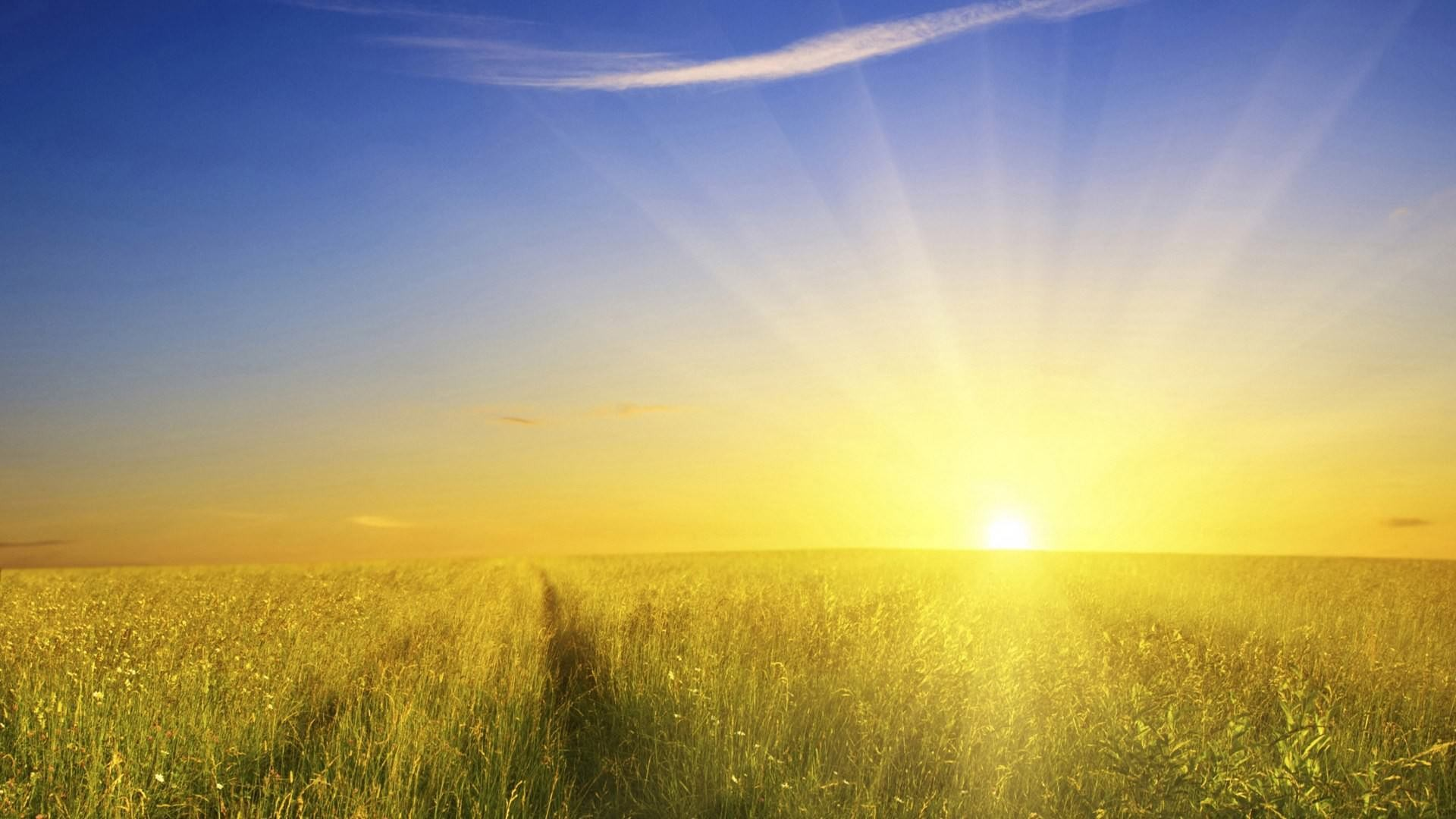 Nature Sunshine Galaxy S4 Wallpapers: Glory Wallpapers ·①