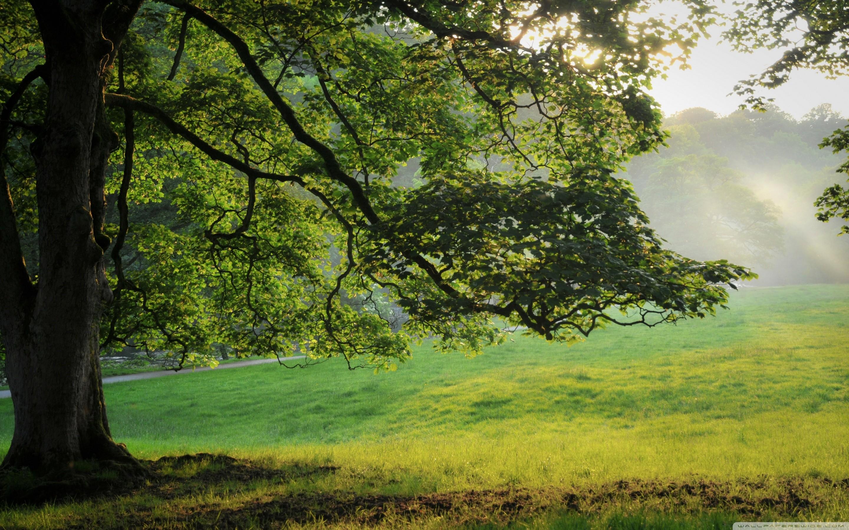 Oak Wallpaper