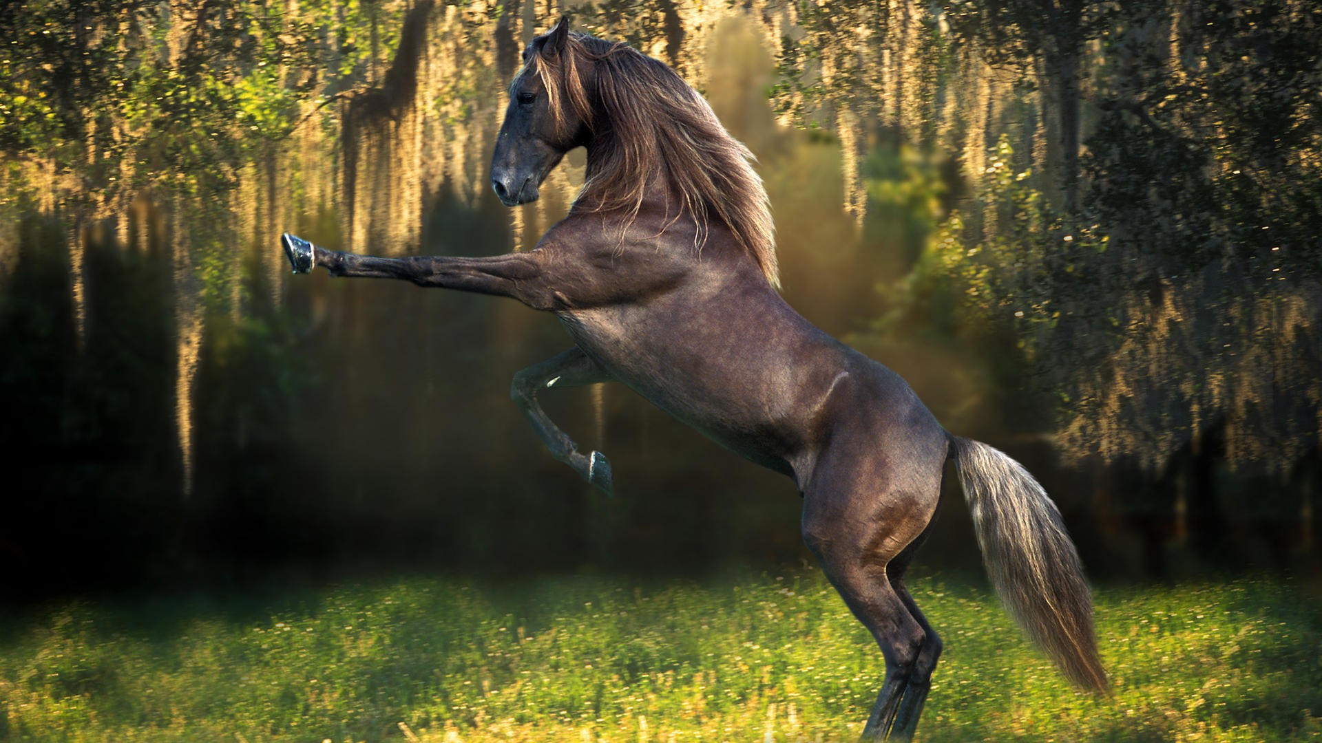 1920x1080 horse desktop wallpaper desktop backgrounds for free hd wallpaper
