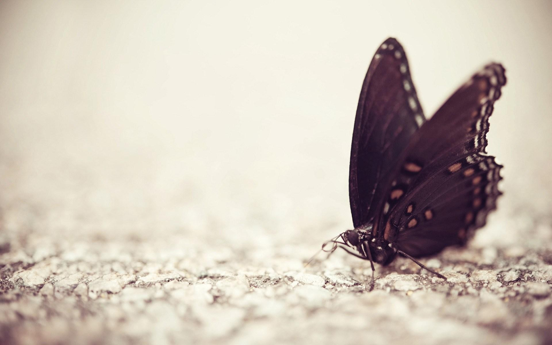 66 Butterfly Backgrounds Download Free Stunning High