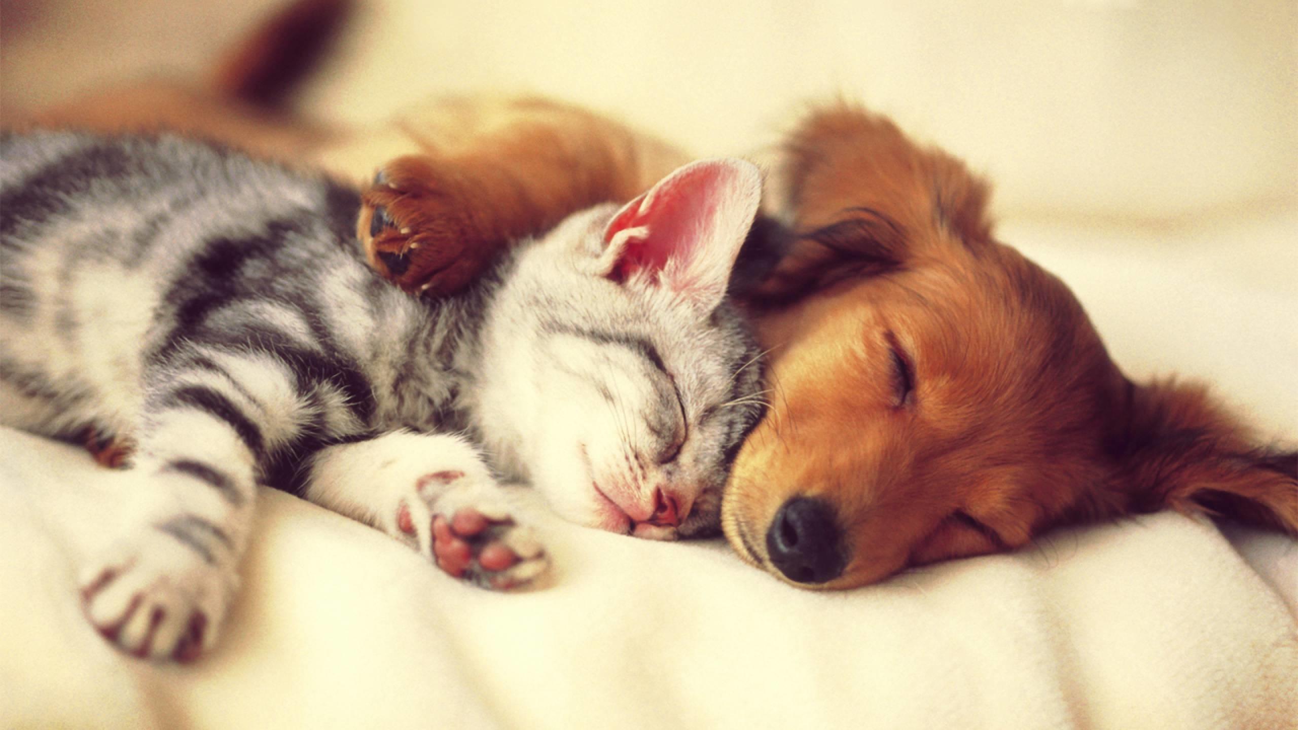 Cat And Dog Wallpaper Wallpapertag