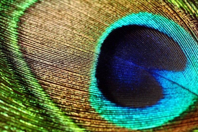 peacock-bird-feathers-wallpaper-12