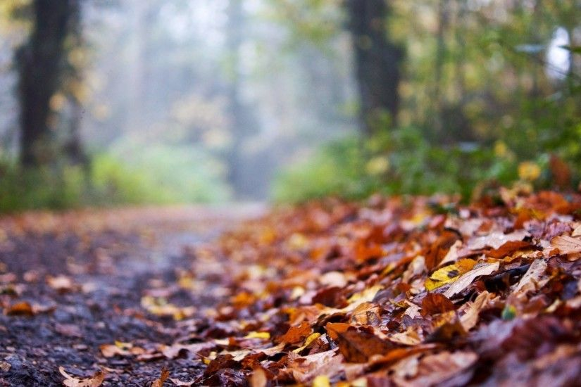 close up leaves leaves autumn road blur background autumn leaves macro  background wallpaper widescreen full screen