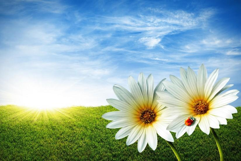 best spring backgrounds 2560x1600 windows xp
