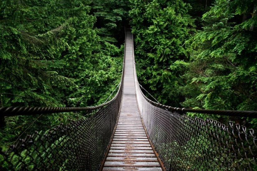 Rainforest Bridge Free Wallpaper Images