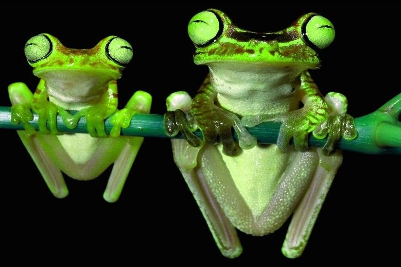 Cute Frog Wallpapers with High Definition Wallpaper 1920x1080 px 194.43 KB  Animals Keroppi Green Animated Clipart