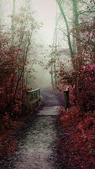 Misty Autumn Path iPhone 6 Plus HD Wallpaper ...