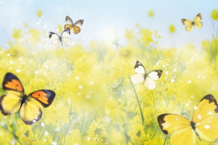 popular butterfly background 1920x1200 windows