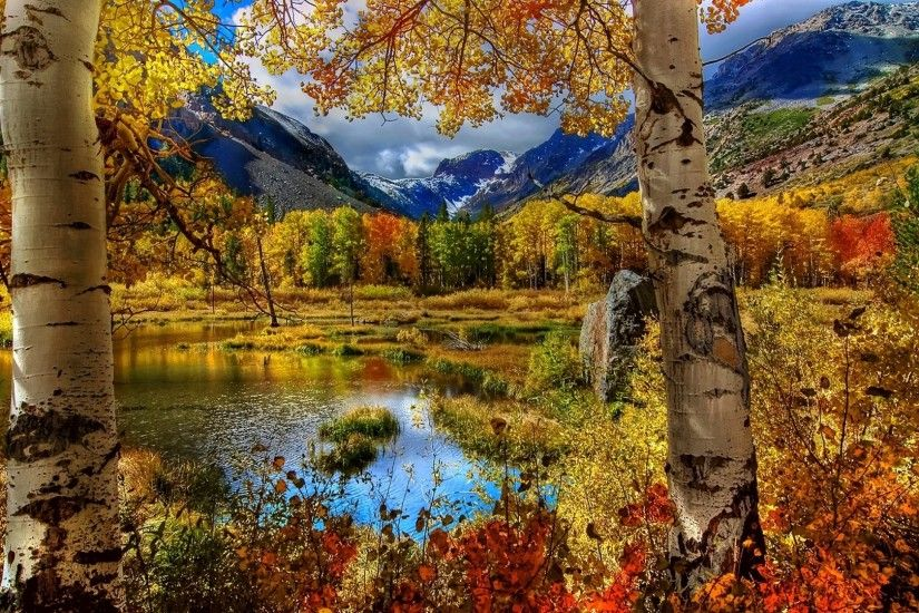 1920x1080 Wallpaper autumn, birch, color, paint, plants, pond, mountain,