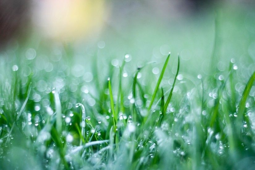 close up grass green grass drops green background wallpaper widescreen full  screen hd wallpapers