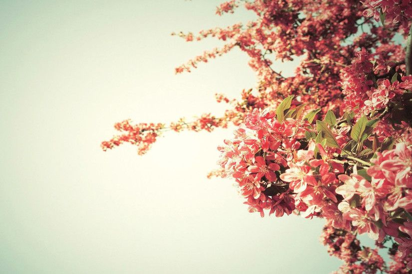 Spring tree blossoms HD Wallpaper 1920x1080 Spring ...