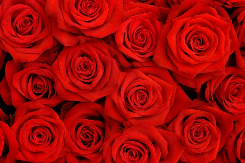 red roses wallpaper for desktop Widescreen Wallpaper