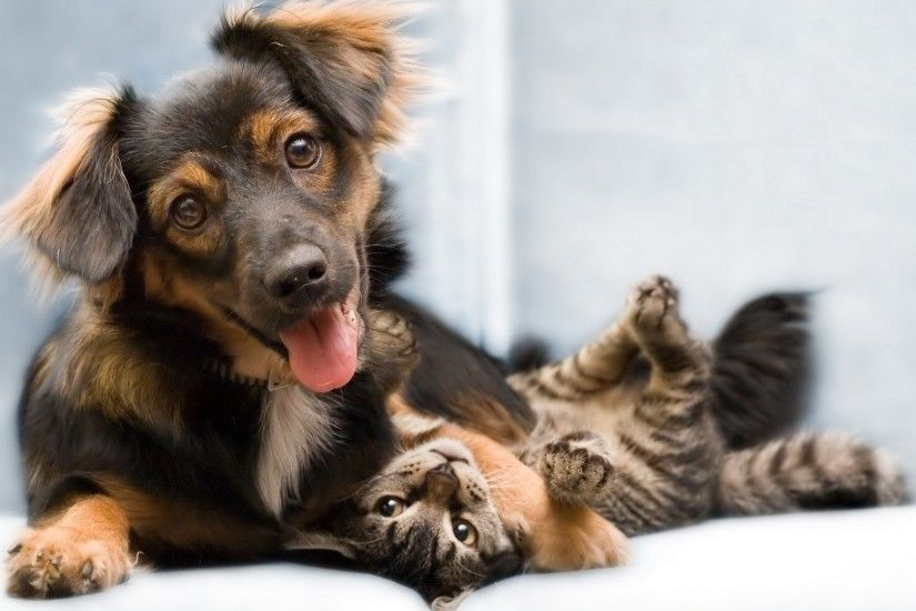 Wallpaper-Cat-dog-friends-full-hd-1920x1080