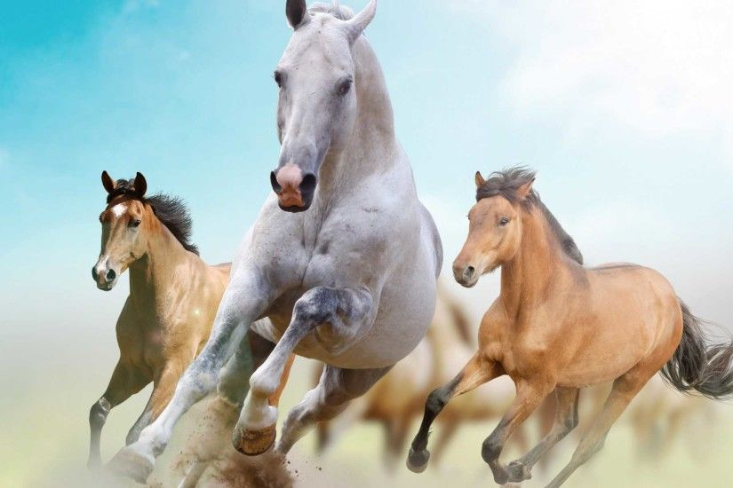 Beautiful Horses Wallpaper | Find tall and beautiful wallpapers of Racing  Horse to decorate desktop .
