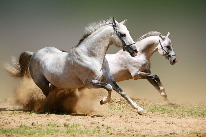 1920×1200 arabian horse running hd desktop wallpapers cool images amazing  apple background wallpapers windows colourfull free lovely wallpapers  1920×1200 ...