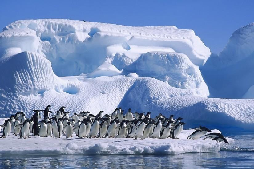 Penguin wallpaper HD background download Mobile iPhone galaxy