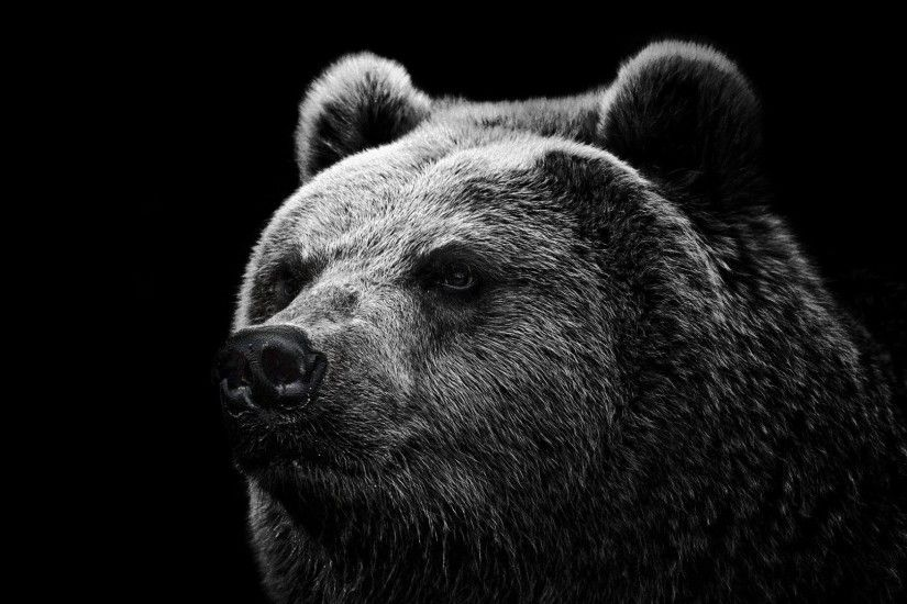 Preview wallpaper bear, grizzly bear, eyes, nose 1920x1080