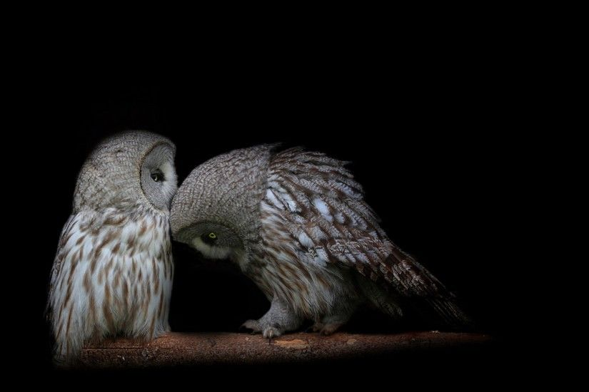 owl couple dark background predators wallpapers 3840×2160 desktop wallpapers  high definition monitor download free amazing background photos artwork ...